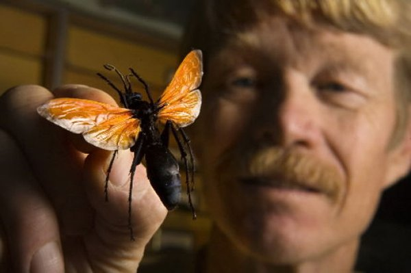 American scientists for the research itself cut off more than 80 insects (2)