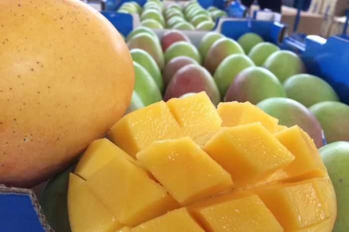 Mangoes, oranges and beef exports increase